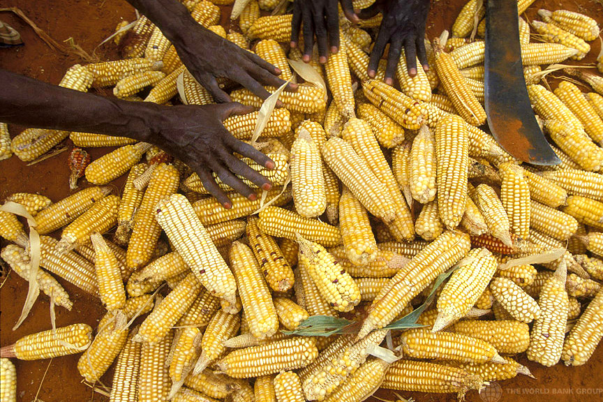Speculation in food prices can be potentially fatal for smallholders. Kenya 2008 [World Bank/Flickr]