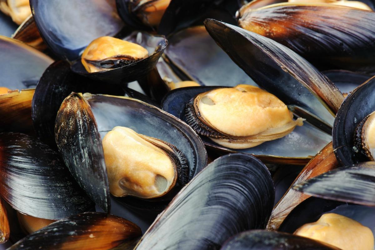Les moules sont une spécialité belge et néerlandaise.