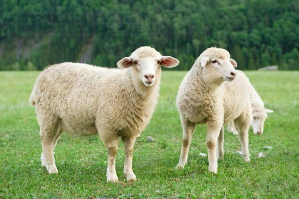 Le clonage, un débat de longue date en Europe