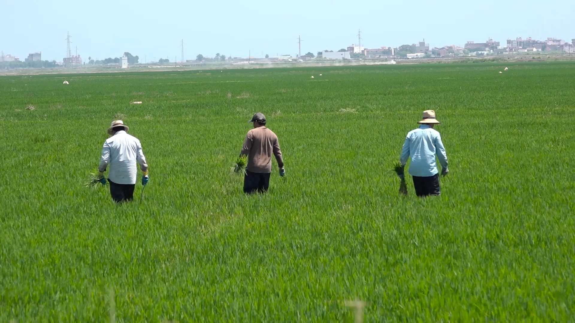 L'engagement de l'UE en termes d'innovation agroalimentaire profite également au consommateur