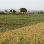 Comment l'agriculture peut-elle aider à contrer les inondations ?
