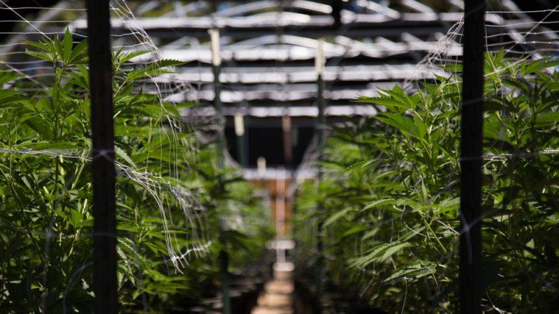 L'efficacité Passe Par Énergétique Compétitivité MarijuanaLa dCWerBxo