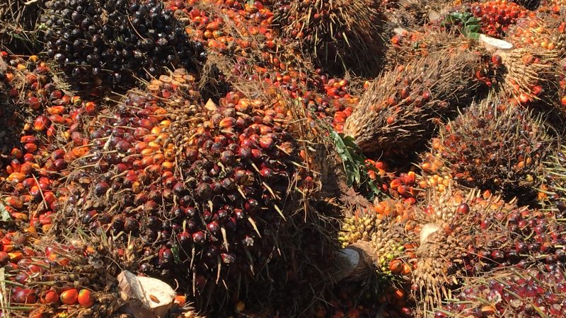 La Malaisie compte sur l'huile de palme durable pour conserver l'accès au marché européen