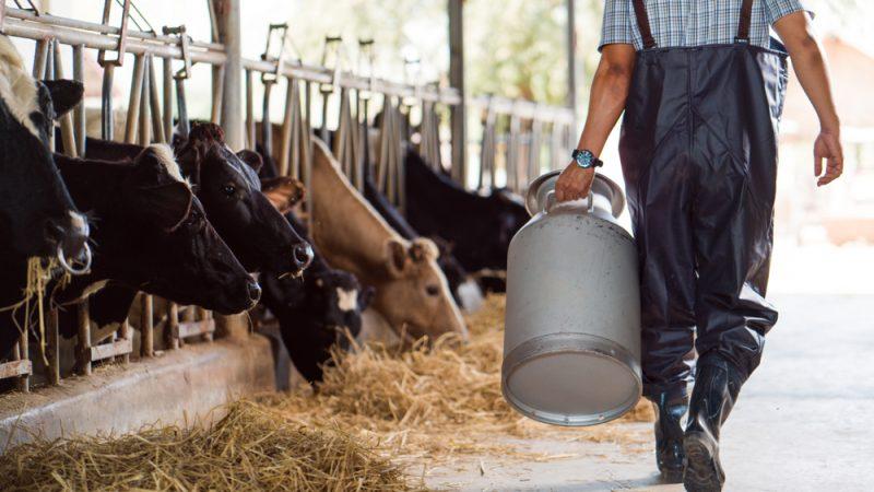 La nouvelle pac va detruire l agriculture familiale belge