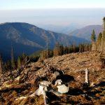 Le trafic du bois profite du coronavirus en Roumanie