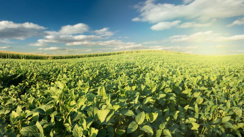 Bruxelles autorise la commercialisation d'un soja génétiquement modifié