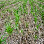 Agriculture durable: les pays de l'UE réclament des études d'impact
